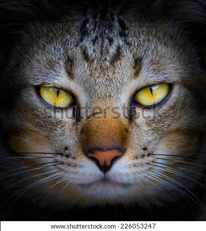 Mysterious gaze of cat  - stock photo