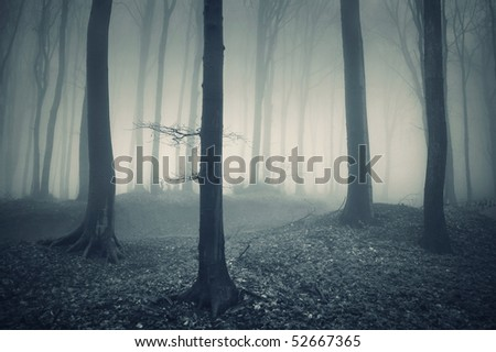 mysterious light in forest - stock photo