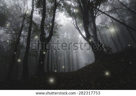 mysterious magical lights sparkling in fantasy forest at night - stock photo