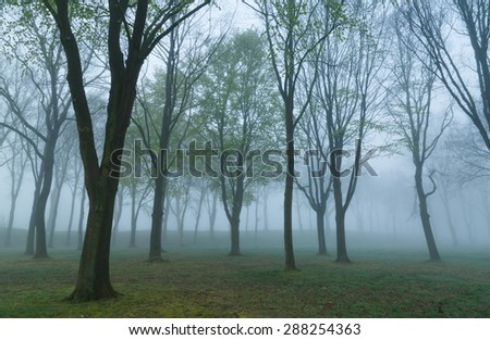 Mysterious mood in the woods on a foggy, spring day. - stock photo