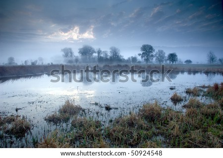 Mysterious morning time in swamp area - stock photo