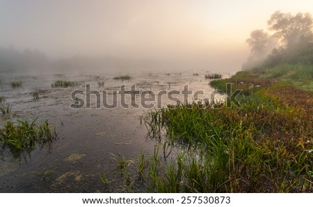 Mysterious morning time in swamp area. Landscape - stock photo