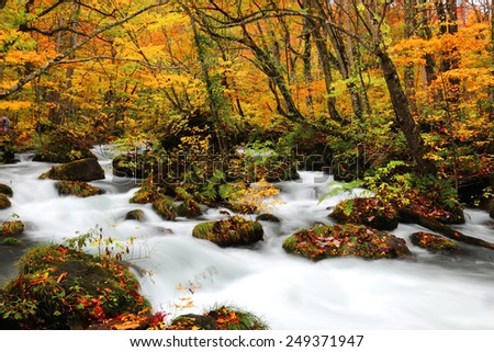 Mysterious Oirase Stream in the autumn forest of Towada Hachimantai National Park in Aomori Japan  - stock photo