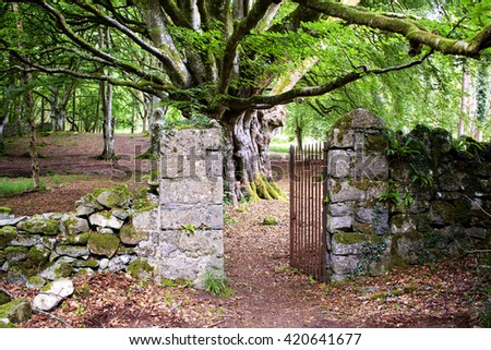 Mysterious old stone gate leading to the enchanted woods somewhere in Ireland.  - stock photo