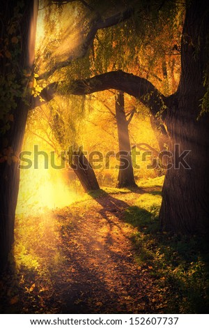 mysterious pathway between arch of trees and sunlight in autumn park - stock photo