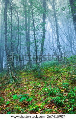 Mysterious spring forest with blue fog and green plants. Morning in Crimea - stock photo
