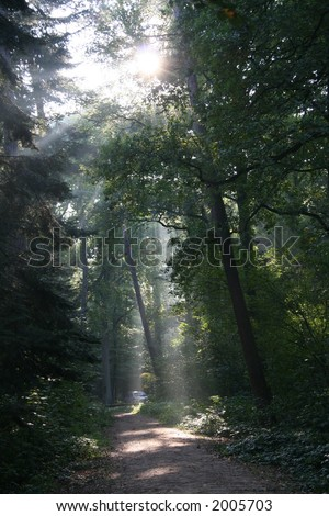 mysterious sunlight in a dutch forest - stock photo