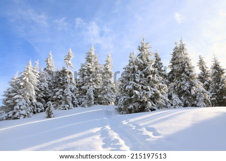 mysterious winter snowy forest - stock photo