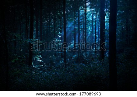 Mystery forest - stock photo