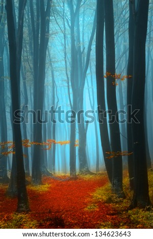 Mystic and magic for during autumn in the forest - stock photo