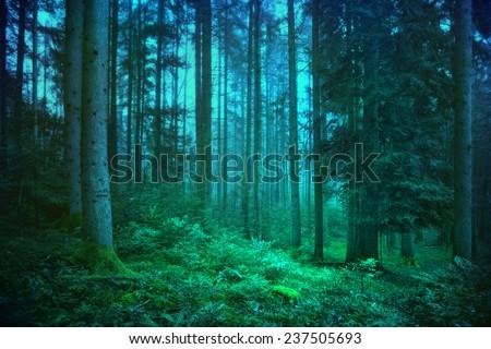 Mystic blue and green seasonal foggy fairytale forest. - stock photo