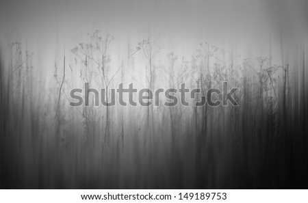 mystic mist monochrome forest - stock photo