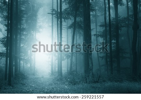 Mystic turquoise blue color light foggy forest scene. (biscay bay pantone color used) - stock photo