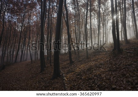 mystical autumn forest in fog - stock photo