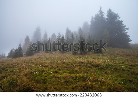 Mystical deep fog in a forest , Ukraine, mountauns - stock photo