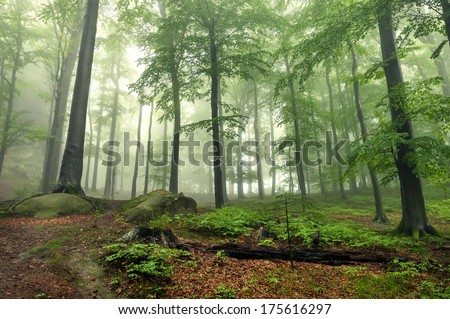 Mystical foggy forest on the slope - stock photo