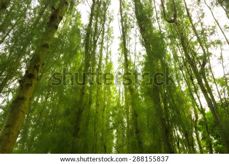 Mystical green  pine forest under view,green tone,soft focus - stock photo