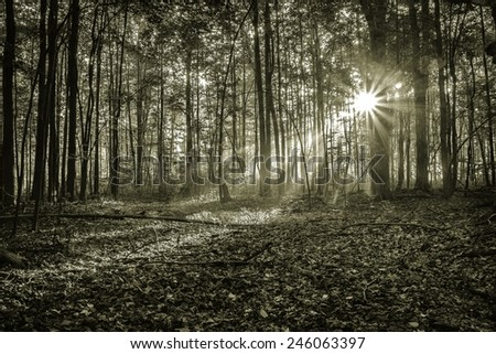 Mystical Morning Forest. Sunlight illuminates a dark forest and a new day begins. - stock photo