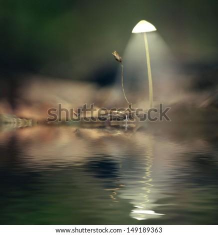 mystical picture mushrooms - stock photo