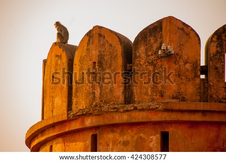Nahagarh Fort overlooking the pink city of Jaipur in the Indian state of Rajasthan.Fragments of architectural details. Monkey. - stock photo