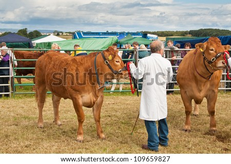 NAIRN, SCOTLAND - JULY 28: An unidentified farmer displays his cattle at the annual Nairnshire Farmers Society show on JULY 28, 2012 in Nairn, Scotland. - stock photo
