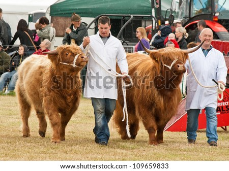 NAIRN, SCOTLAND - JULY 28: Unidentified farmers display their cattle at the annual Nairnshire Farmers Society show on JULY 28, 2012 in Nairn, Scotland. - stock photo