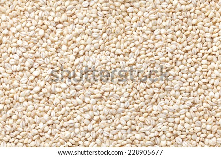 naked barley - stock photo