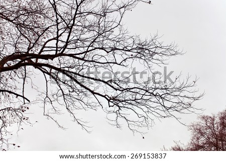 Naked branches of a tree against close up  - stock photo