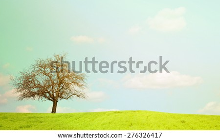 Naked oak tree and beautiful landscape - stock photo