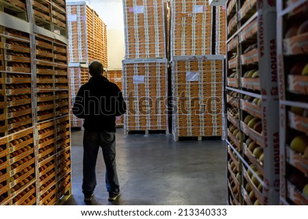 "NAOUSSA GREECE- AUGUST 20 2014: Worker Inspects Products of Agricultural Cooperative of Naoussa Greece stacked in boxes. The famous ""Naoussa Peaches"" are the area's main product. Fruit production. - stock photo"