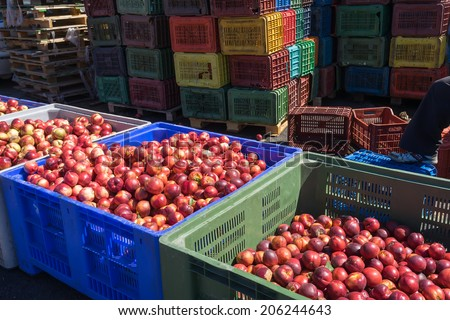 "NAOUSSA, GREECE- JULY 10, 2014: Products of Agricultural Cooperative of Naoussa, Greece, stacked in crates. The famous ""Naoussa Peaches"", are the area's main product. Fruit production. - stock photo"