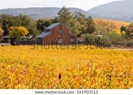 Napa Valley Autumn Vineyards and Barn - stock photo