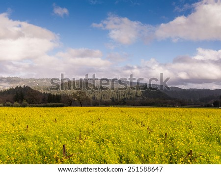 Napa Valley Blooming Mustard, Vineyards, Mountains, Clouds, Sky - stock photo