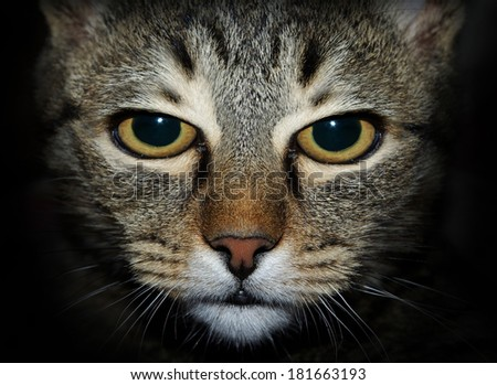 Nasty cat looking at you - stock photo