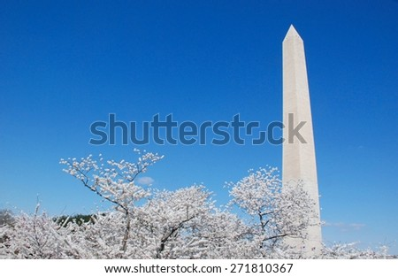 National Monument in Washington, DC with the cherry blossoms in bloom - stock photo