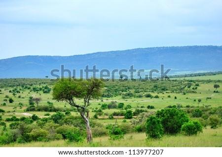 National Park in Kenya - stock photo