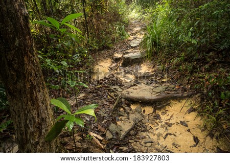 National Park in Penang, Malaysia - stock photo