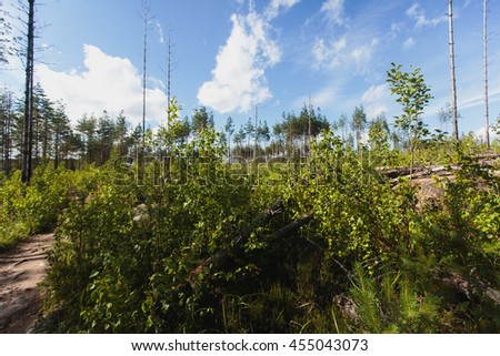 National Park Repovesi, Finland, summer sunny day - stock photo