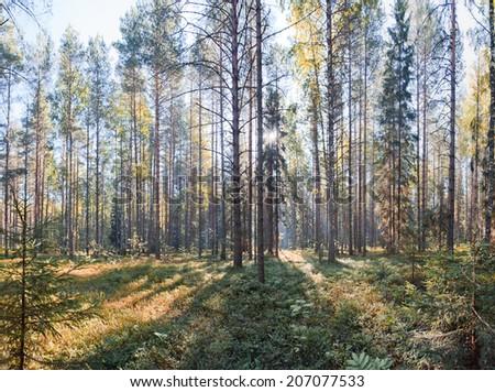 "National Park ""Russian North"" in Vologda region. Summer panorama - stock photo"
