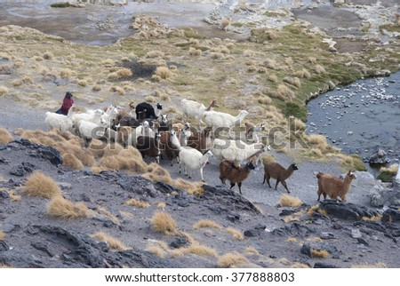 National park, Salar Uyuni, Bolivia. - stock photo