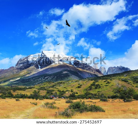 National Park Torres del Paine, Chile. Snow-capped mountains and rocks Torres del Paine. Yellowed autumn field, Patagonia - stock photo