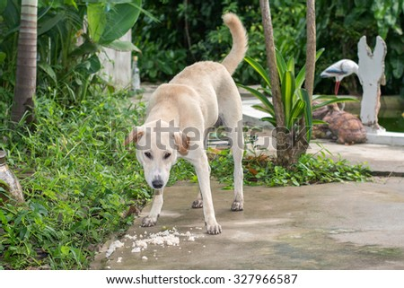 Native adult dog eating his food on cement wall - stock photo