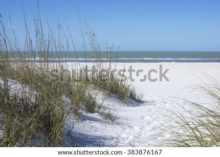 Native Uniola paniculata sea oats establish protective sand dunes on white beaches of St. Petersburg, Florida - stock photo