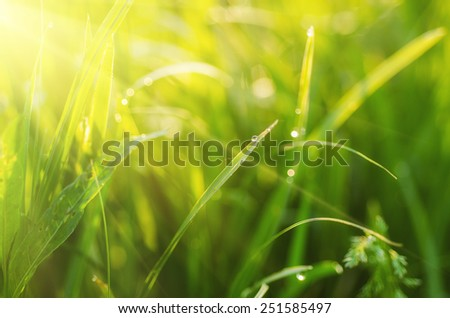 Natural abstract soft green sunny background with grass and light spots - stock photo