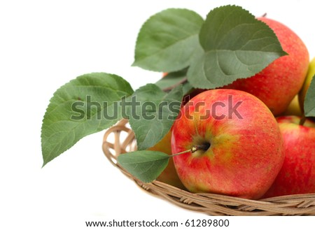 Natural apples with leaves just from apple tree. - stock photo