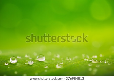 Natural background, fresh green leaf texture and water drops  - stock photo
