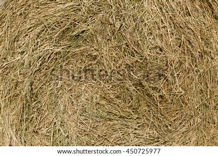 Natural background of hay, texture. Grass cuttings are compacted into a bale closeup - stock photo