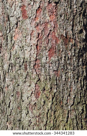 Natural background of Spruce bark. - stock photo