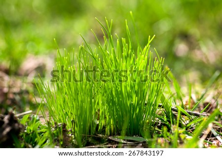 Natural background with fresh green grass in spring, soft focus. - stock photo