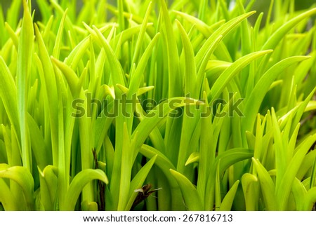 Natural background with fresh green leaves in spring, soft focus. - stock photo